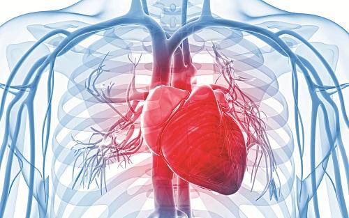 hệ tim mạch